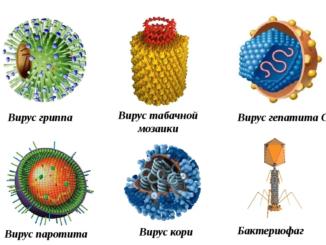 семейства вирусов