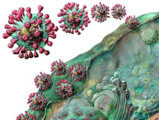 вирус SARS-CoV-2